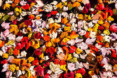 Fallen Leaf Photograph - Leaves Galore by Karol Livote