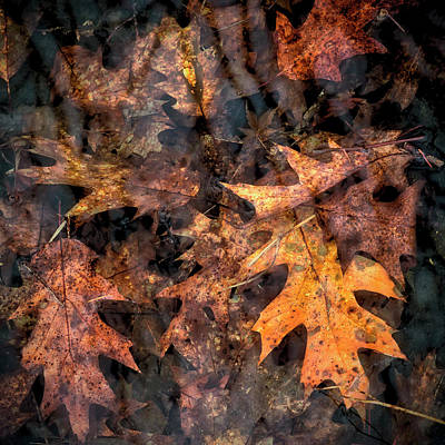 Photograph - Leaves In A Rock Pool Square by Belinda Greb
