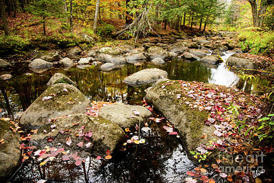 Photograph - Leaves In A Stream by Alana Ranney