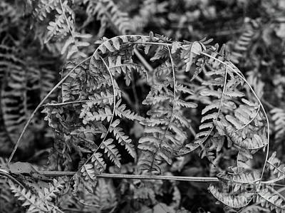 Photograph - Leaves In Black And White by Steven Parker
