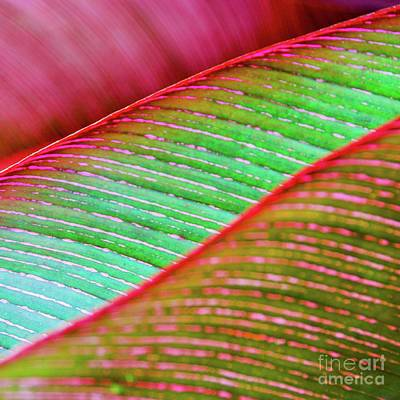 Photograph - Leaves In Color  by D Davila