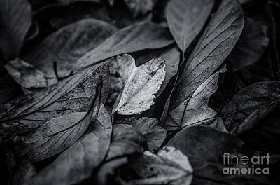 Photograph - Leaves In Darkness by Rachel Cohen