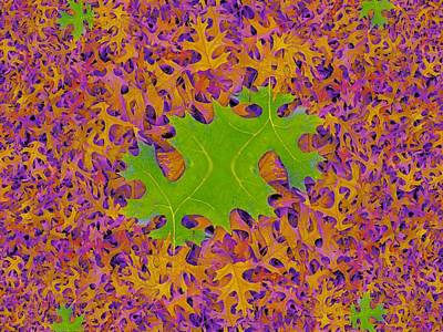 Photograph - Leaves In Fractal 2 by Tim Allen