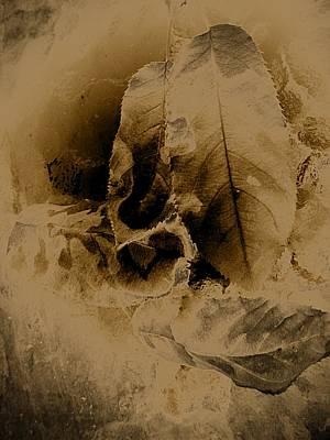 Leaves In Sepia Art Print