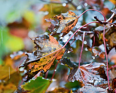 Photograph - Leaves In The Rain by Kerri Farley