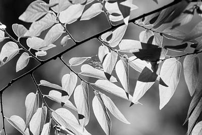 Oklahoma Photograph - Leaves In The Sun by Nathan Hillis