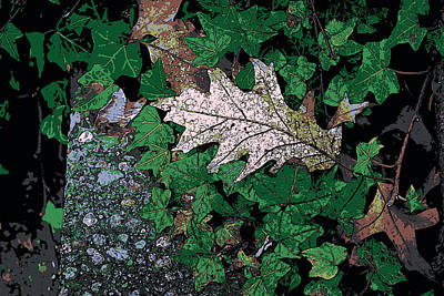 Photograph - Leaves by John Rossman