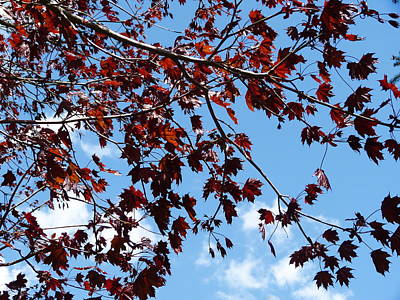 Tree Photograph - Leaves Kissed By Sky by Abstract Angel Artist Stephen K