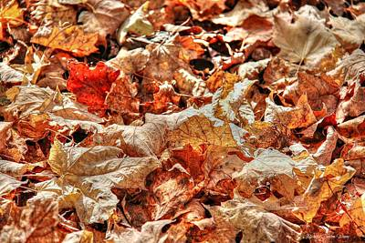 Photograph - Leaves by Michaela Preston