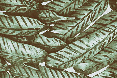 Photograph - Leaves No. 3-1 by Sandy Taylor