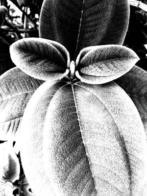 Photograph - Leaves No. 36 by Fei A