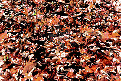 Photograph - Leaves Of Arkansas In Abstract by Gina O'Brien