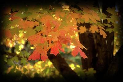Photograph - Leaves Of Autumn by Angie Tirado