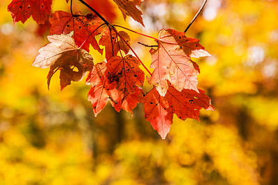 Of Autumn Photograph - Leaves Of Autumn by Karol Livote