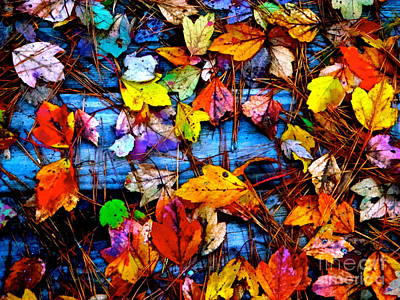 Photograph - Leaves Of Colors  by Cathy Dee Janes