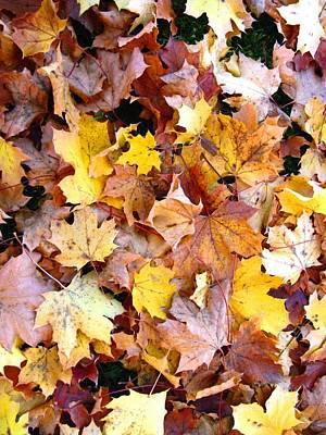 Photograph - Leaves Of Fall by Rhonda Barrett