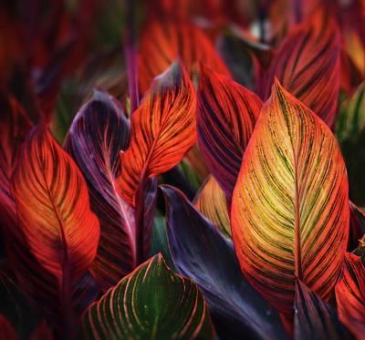 Going Green - Leaves of Fire by Ceri Jones
