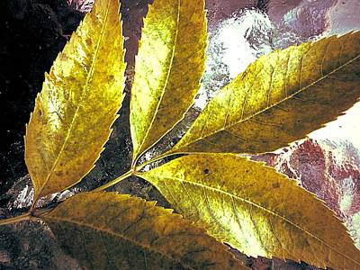 Leaves Of Gold Art Print by Beth Akerman