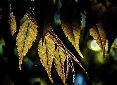Photograph - Leaves Of Green by Joseph Hollingsworth
