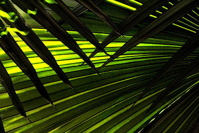 Photograph - Leaves Of Palm Color by Marilyn Hunt