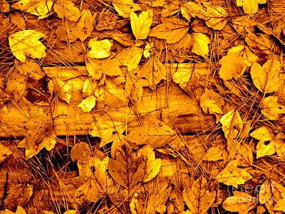 Photograph - Leaves Of Sepia by Cathy Dee Janes