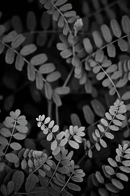 Photograph - Leaves Of Vetch by Photography by Tiwago