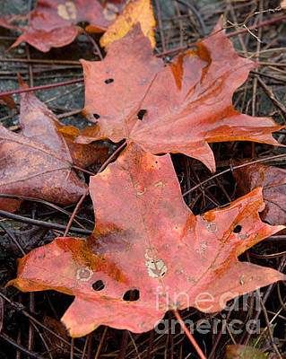 Photograph - Leaves-old Leaves by April Bielefeldt