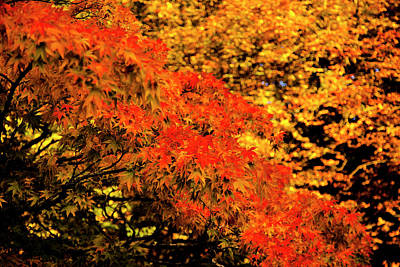 Photograph - Leaves On Fire by Stewart Scott
