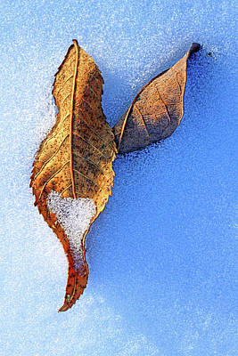 Photograph - Leaves On Snow by Carolyn Derstine