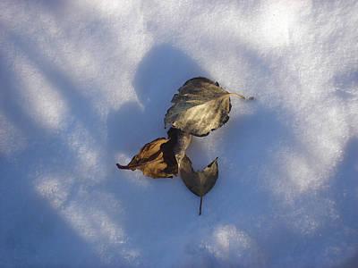 Leaves On Snow Art Print