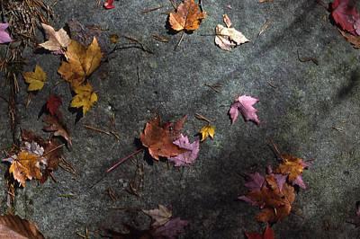 Leaves On Stone Art Print by Randy Muir