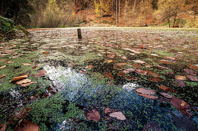 Photograph - Leaves On The Lake by Okan YILMAZ