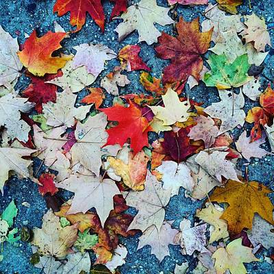 Leaves On The Sidewalk Art Print by Robert Nguyen