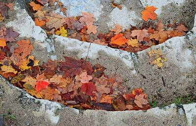 Photograph - Leaves On The Stairs  by Lyle Crump