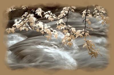 Leaves Over Gossamer Waters Art Print
