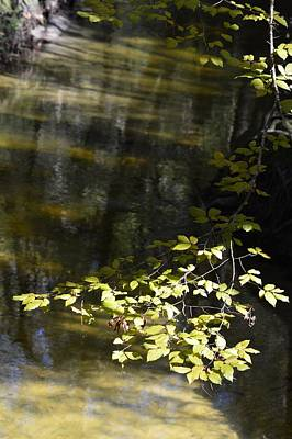 Photograph - Leaves Over Sweetwater Creek by Warren Thompson