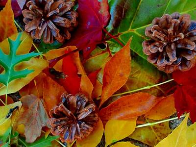 Photograph - Leaves Pinecones Natural by Beth Akerman