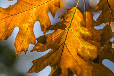 Photograph - Leaves by Randy Bayne