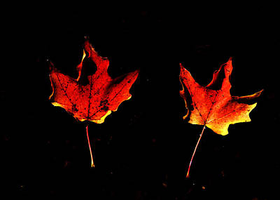 Photograph - Leaves by Ron Read