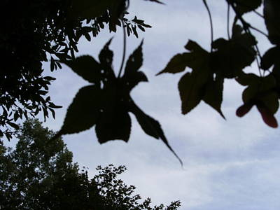 Bob Smith Photograph - Leaves That Linger by Bob Smith