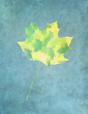 Photograph - Leaves Through Maple Leaf On Texture 1 by Gary Slawsky