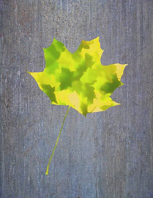 Photograph - Leaves Through Maple Leaf On Texture 2 by Gary Slawsky