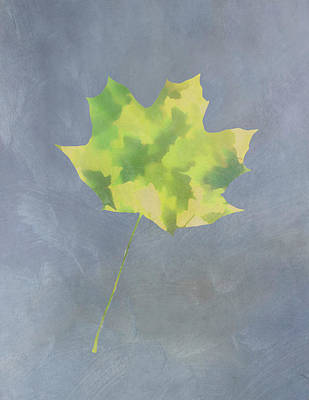 Photograph - Leaves Through Maple Leaf On Texture 4 by Gary Slawsky