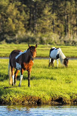 Leaving The Chincoteague Ponies Art Print