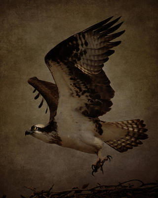 Photograph - Leaving The Nest by Erica Kinsella