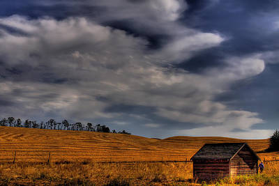 Leaving The Shed Art Print by David Patterson