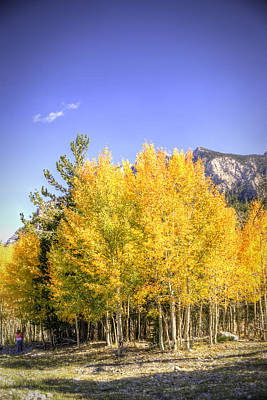 Photograph - Lee Canyon Aspen by Robert Melvin