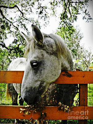 Draft Horses Photograph - Lee's Ranch 10 by Sarah Loft