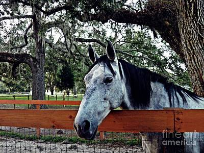 Photograph - Lee's Ranch 11 by Sarah Loft