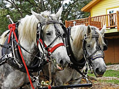 Draft Horses Photograph - Lee's Ranch 9 by Sarah Loft